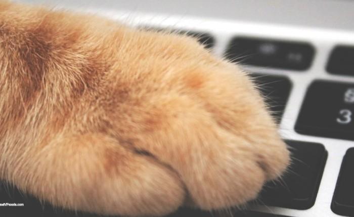 Cat-O-Ween